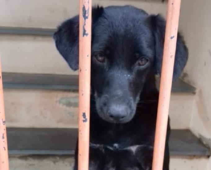 Doação de cachorro macho castrado vacinado