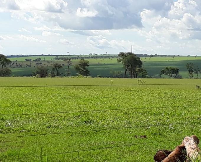 Excelente fazenda com 193 alqueires na região de ivinhema