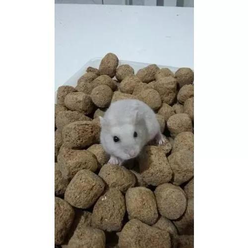 Labina - ração para roedores 20kg presense rato e