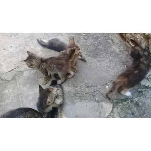 Doacao de filhotes de gato.