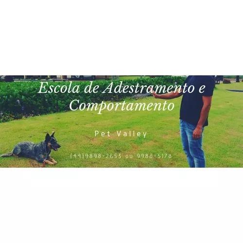Escola de adestramento e comportamento animal