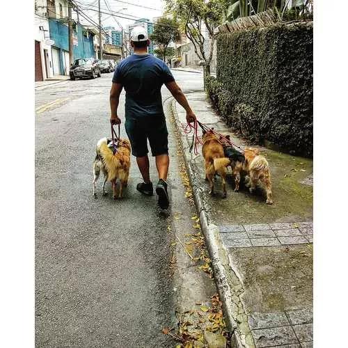 Passeador de cães - dogwalker - morumbi & região