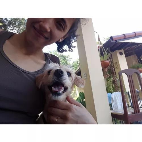 Pet sitter (babá de animais)