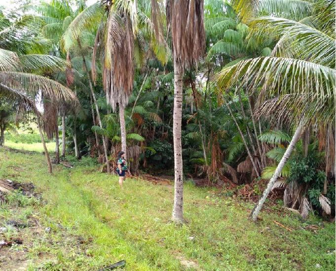 Fazenda a 6 km de vila pavão