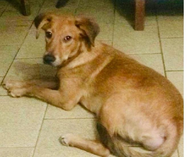 Doações de animais de estimação em diadema sp