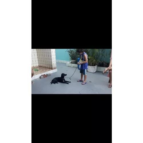 Adestramento de cachorro a domicilio