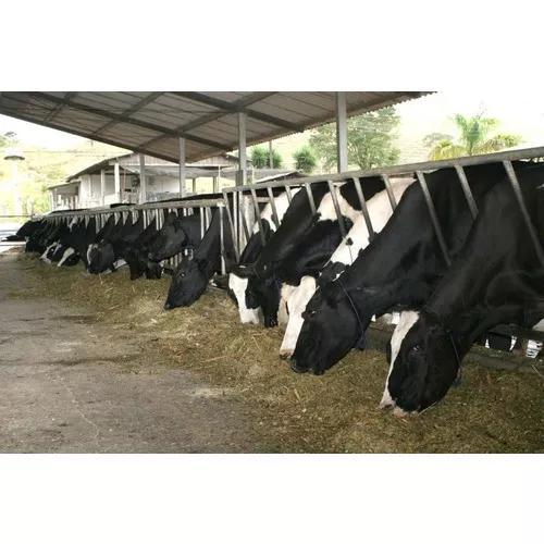 Formulação ração bovino de leite