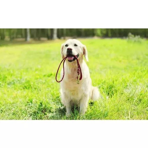 Passeador de cães | dogwalker