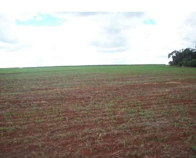 9.7 alq. 5 plantado pega imóvel até 700 mil em caldas
