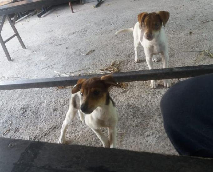Cachorrinhos filhotes precisando de um lar amoroso