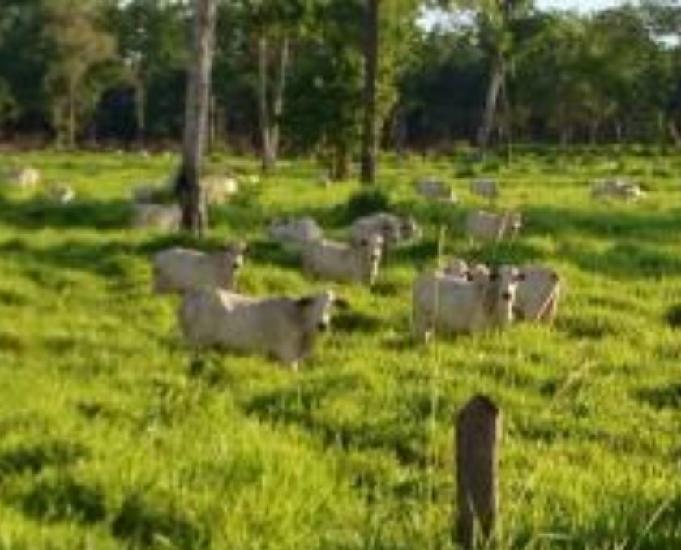 Fazenda a venda em barão de melgaço - mt (pecuária)