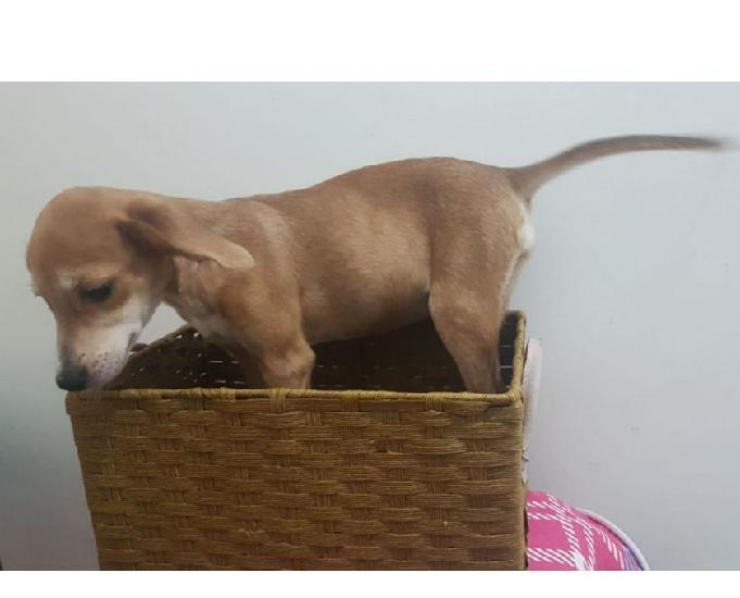 Styllo, uma cachorrinha amorosa