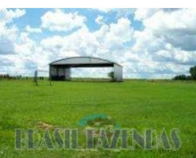 Fazenda no Pará.72 mil hectares na pecuária