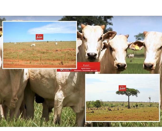 Fazenda no município de são félix do araguaia mt