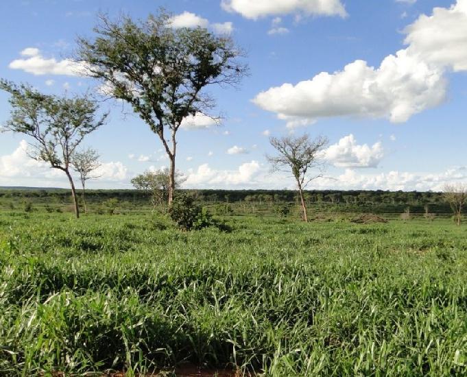 Oportunidade de fazenda com 340 hectares em bataguassu ms