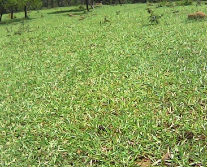 Chácara em oferta - 2 hectares com córrego por 70 mil