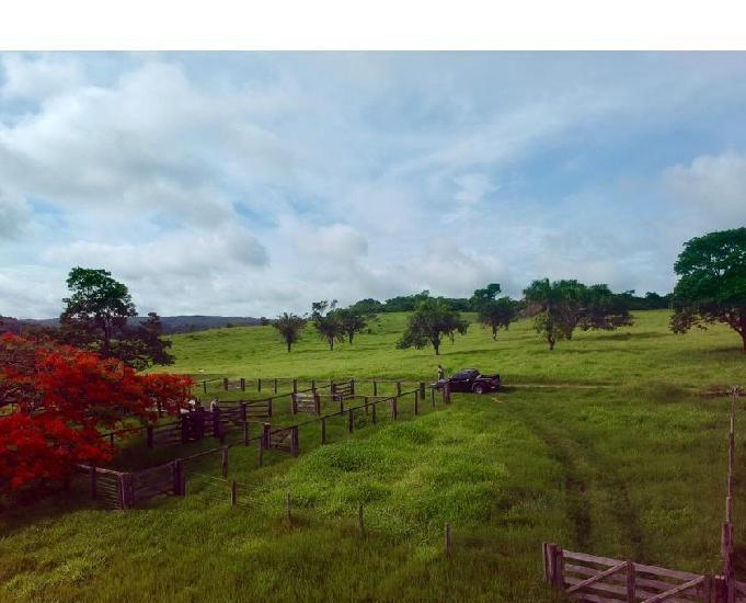 Fazenda de 19 alqueires em jandaia-go