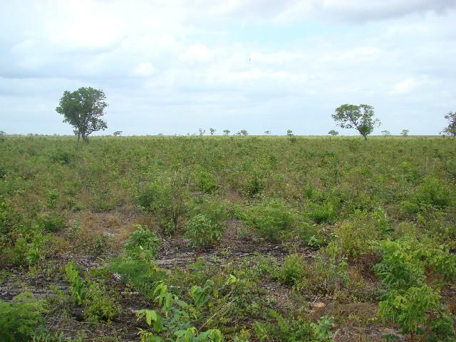 Arrendo 820 ha- aberta- para soja e milho