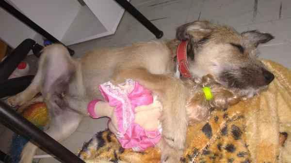 Cachorro macho para adoção