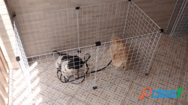 Cercado para cachorro pequeno porte