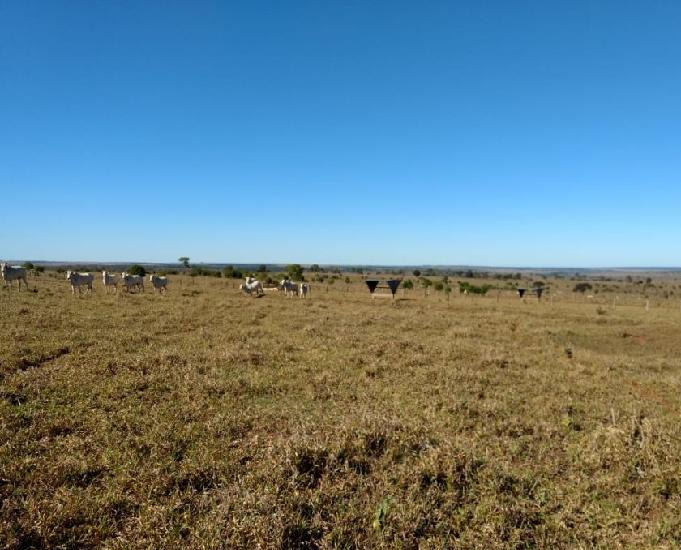 Oportunidade fazenda com 1.739 alqueires em campo grande ms