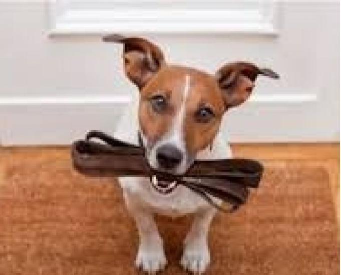 Cuidador de pets