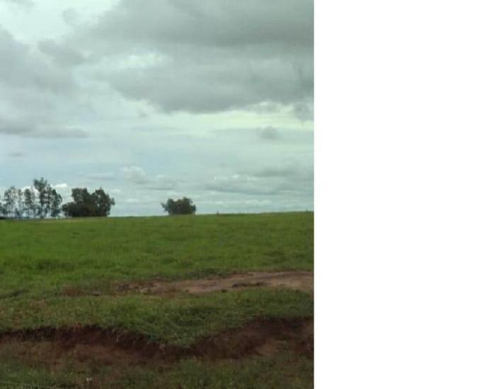 Excelente fazenda toda formada na região de loanda paraná