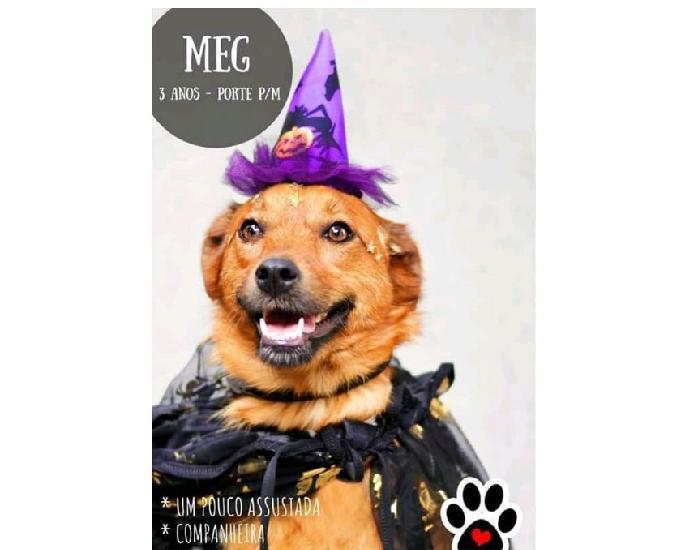 Meg, doce e companheira