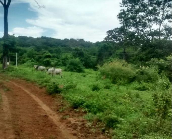 Arrendo 1168 hectares fazenda no mt