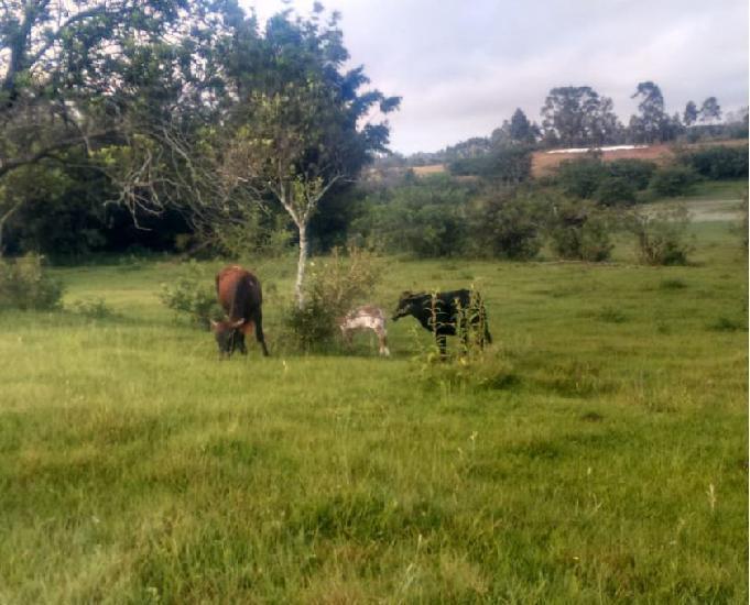 Sítio 2,6 hectares - rincão são joão - glorinha - rs