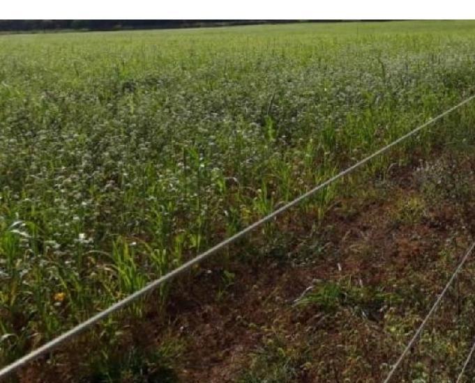 420 alq. planta 300 com 60 em soja uruaçu go