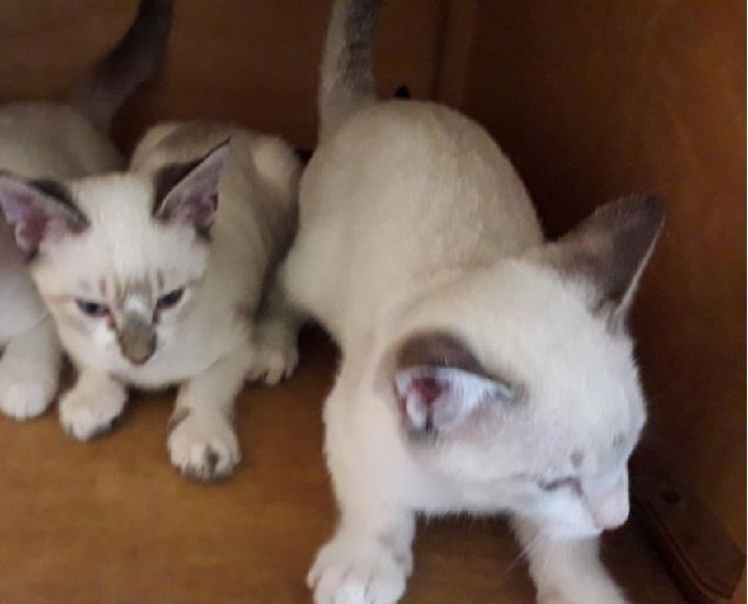 Doação: 3 gatinhas e 1 gatinho - 25 de agosto Caxias