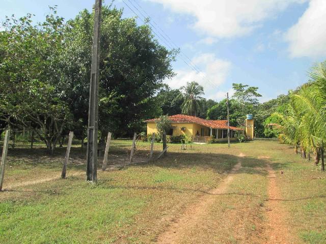 Fazenda 350 ha no município de terra alta-pa