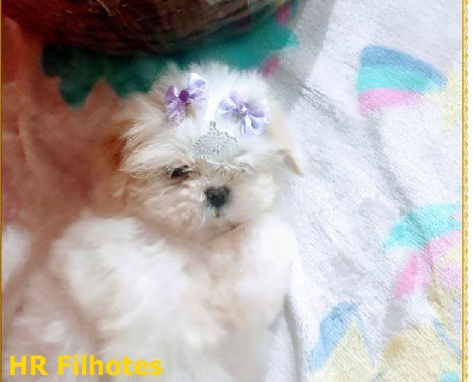 Lindíssima filhote de shih tzu fêmea porte mine **