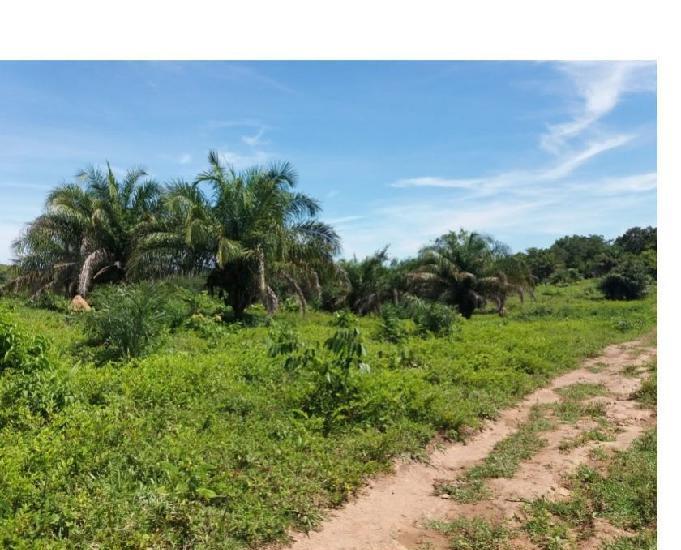 Fazenda pecuária 100 km de cuiabá lago do manso