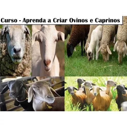 Apostila de criação de ovinos e caprinos/ ovelhas e