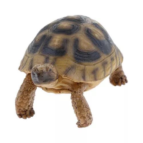 Aquário peixe tank tartaruga falsificação tartaruga está