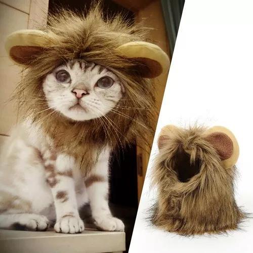 Engraçado pequeno cão gato cosplay leão peruca cabeça bo