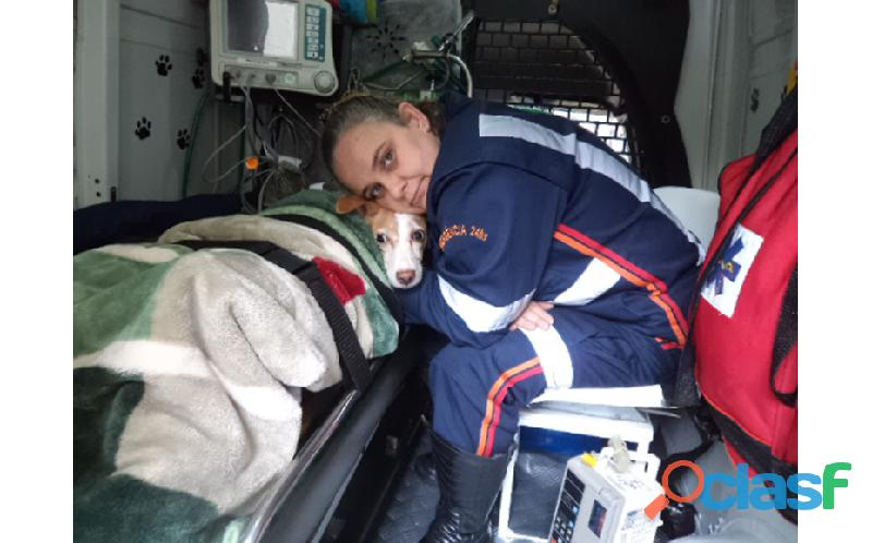 Médico veterinário 24 horas à domicílio