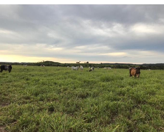 Fazenda 327 Alqueires (1.582 hectares)- Pedro Afonso-TO