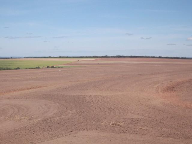 Fazenda soja- gado- eucalipto- tocantins