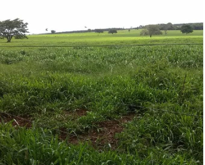 Excelente fazenda com 467 hectares na região de ivinhema ms