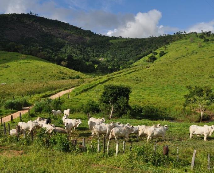 Fazenda de 550 alqueires sentido carlos chagas mg