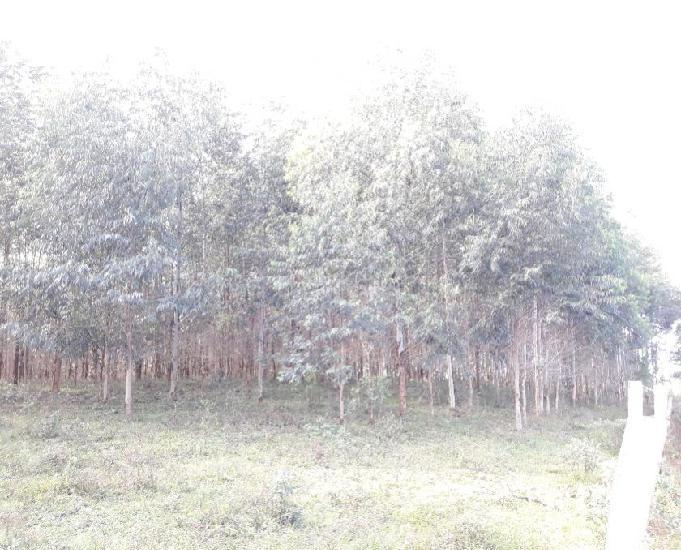 Rea de terra com 5h e mato de eucalipto em triunfo