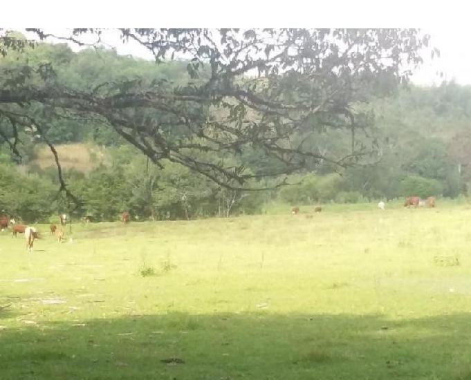 Vendo area rural criação de gado, pecuaria e agricultura