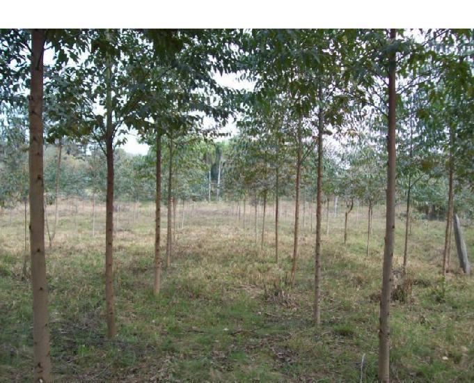 Sítio de 3 hectares em taquara, rs, com reflorestamento