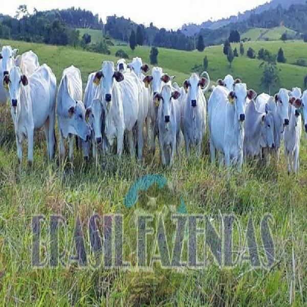 Fazenda a 85 km de eunápolis ba.433 ha
