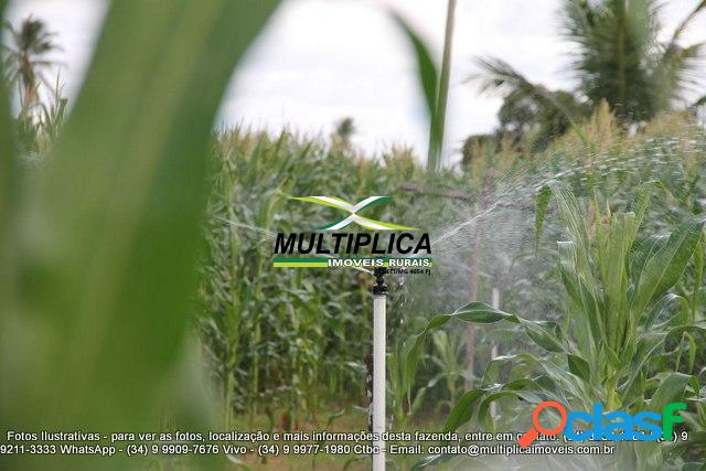 Fazenda araguari, 83 ha, milho, tomate, pepino, irrigado