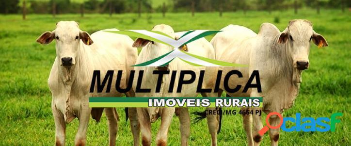 Fazenda a venda em tupaciguara mg 58,08 hectares.