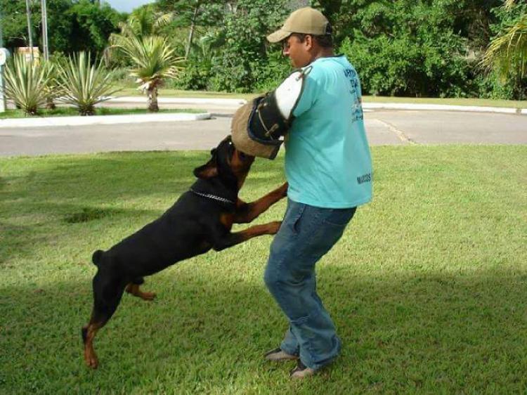 Adestrador de cães e gatos